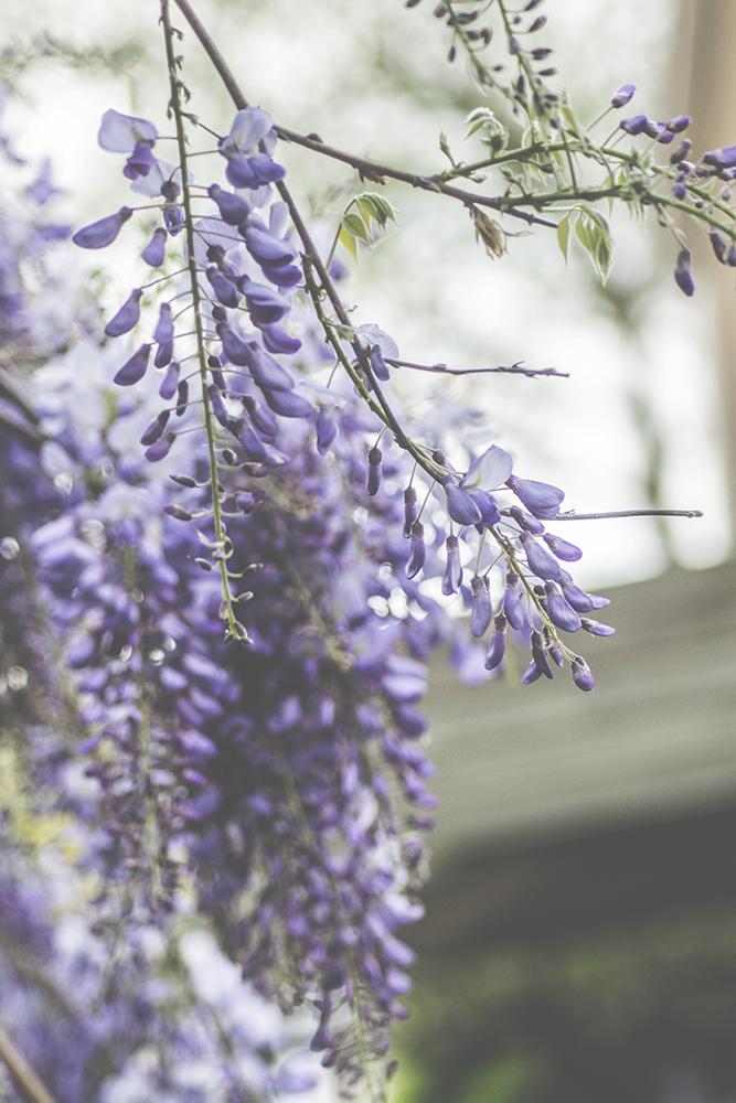 paars bloem bokeh dromerig fotografie natuur