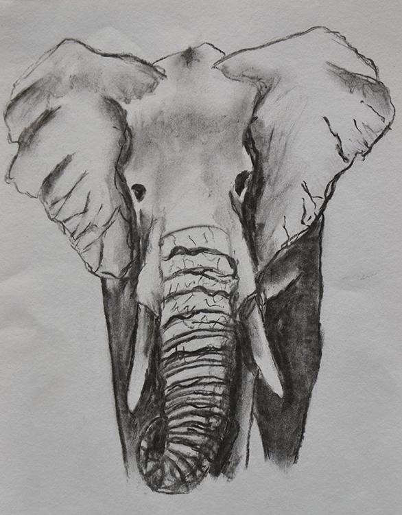 olifant tekening drawing charcoal houtskool